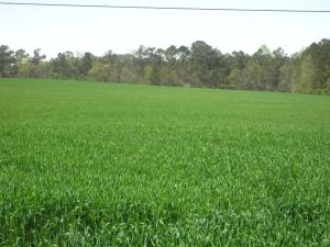 Farmland in Sunny Side